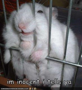 im inocent i tells ya