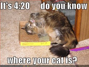 It's 4:20      do you know  where your cat is?