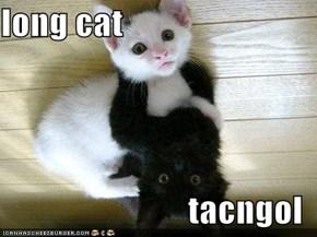 long cat   tacngol
