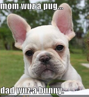 mom wuz a pug...  dad wuz a bunny.