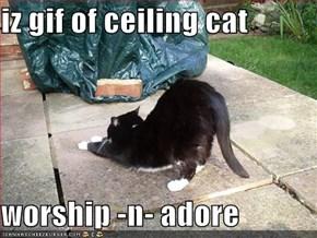 iz gif of ceiling cat  worship -n- adore