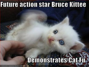 Future action star Bruce Kittee  Demonstrates Cat Fu