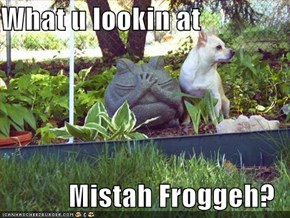 What u lookin at  Mistah Froggeh?