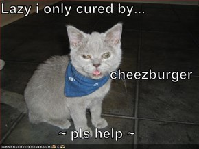 Lazy i only cured by... cheezburger ~ pls help ~