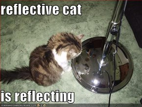 reflective cat  is reflecting