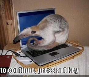 to continue, press ant key