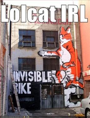 Lolcat IRL