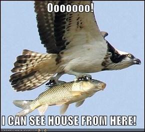 Ooooooo!  I CAN SEE HOUSE FROM HERE!