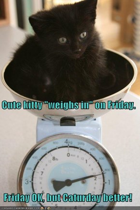 "Cute kitty ""weighs in"" on Friday.  Friday OK, but Caturday better!"