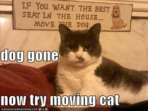 dog gone now try moving cat
