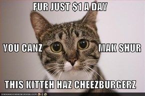 FUR JUST $1 A DAY    YOU CANZ                            MAK SHUR  THIS KITTEH HAZ CHEEZBURGERZ