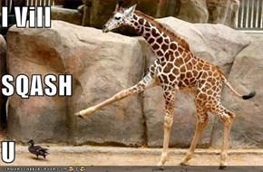 I Vill  SQASH U