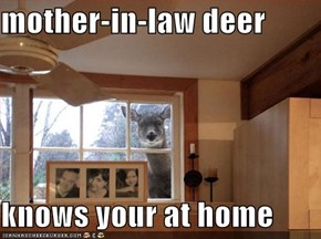 mother-in-law deer   knows your at home