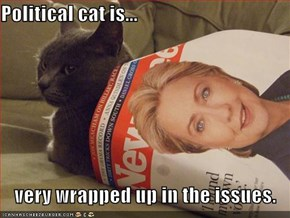 Political cat is...  very wrapped up in the issues.