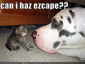 can i haz ezcape??