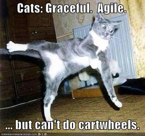 Cats: Graceful.  Agile.     ... but can't do cartwheels.