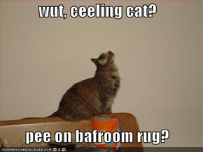 wut, ceeling cat?  pee on bafroom rug?