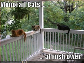 Monorail Cats ...  ... at rush ower