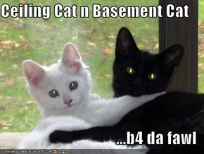 Ceiling Cat n Basement Cat  ...b4 da fawl
