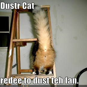 Dustr Cat  redee to dust teh fan.