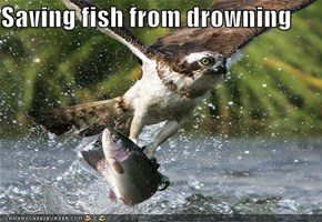 Saving fish from drowning