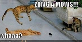 ZOMG A MOWS!!!  whaaa?