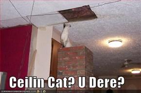 Ceilin Cat? U Dere?