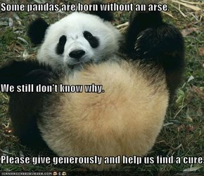 Some pandas are born without an arse. We still don't know why. Please give generously and help us find a cure.