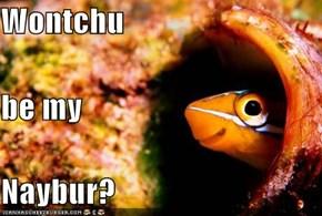 Wontchu  be my  Naybur?