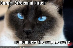 Barbra Streisand kitteh  remembers the way we were