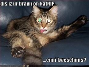 dis iz ur brayn on katNIP...  ...enni kweschuns?