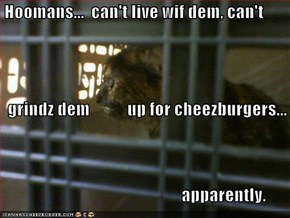Hoomans...  can't live wif dem, can't   grindz dem           up for cheezburgers...                                                       apparently.