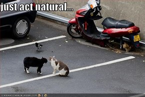 just act natural...