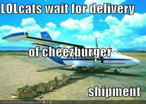 LOLcats wait for delivery of cheezburger  shipment