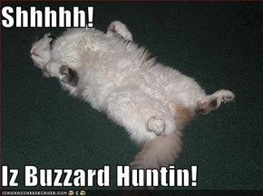Shhhhh!  Iz Buzzard Huntin!