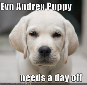 Evn Andrex Puppy  needs a day off