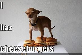 i haz cheeseburgers