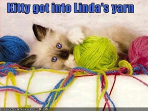 Kitty got into Linda's yarn