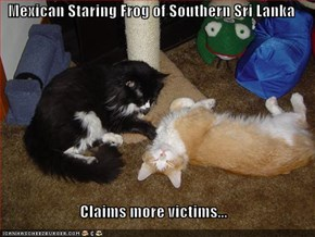 Mexican Staring Frog of Southern Sri Lanka  Claims more victims...