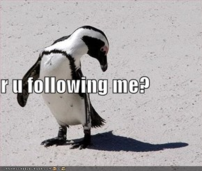 r u following me?