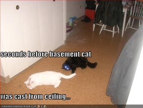seconds before basement cat  was cast from ceiling...