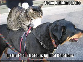 Team building at the  Institute of Strategic Animal Relations