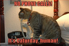 NO PHONE CALLS!  It's Caturday, human!