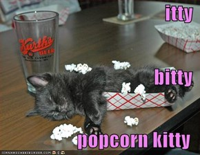 itty bitty popcorn kitty