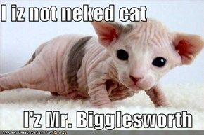 I iz not neked cat  I'z Mr. Bigglesworth