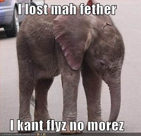 I lost mah fether  I kant flyz no morez
