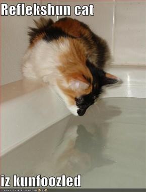 Reflekshun cat  iz kunfoozled