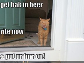get bak in heer rite now & put ur furr on!