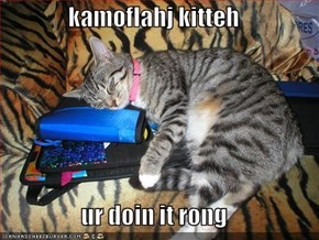 kamoflahj kitteh  ur doin it rong