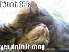 kitteh CPR  yer doin it rong